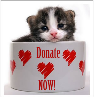 onedonation