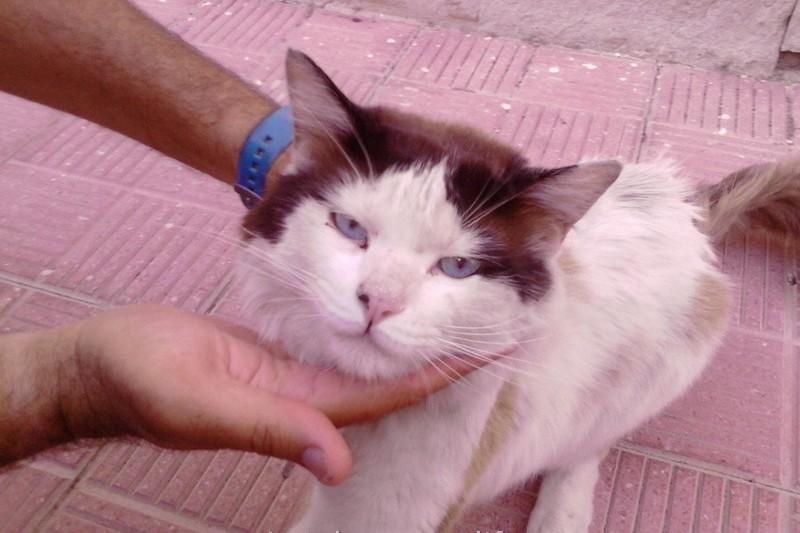 Dehydrated Cat Eyes