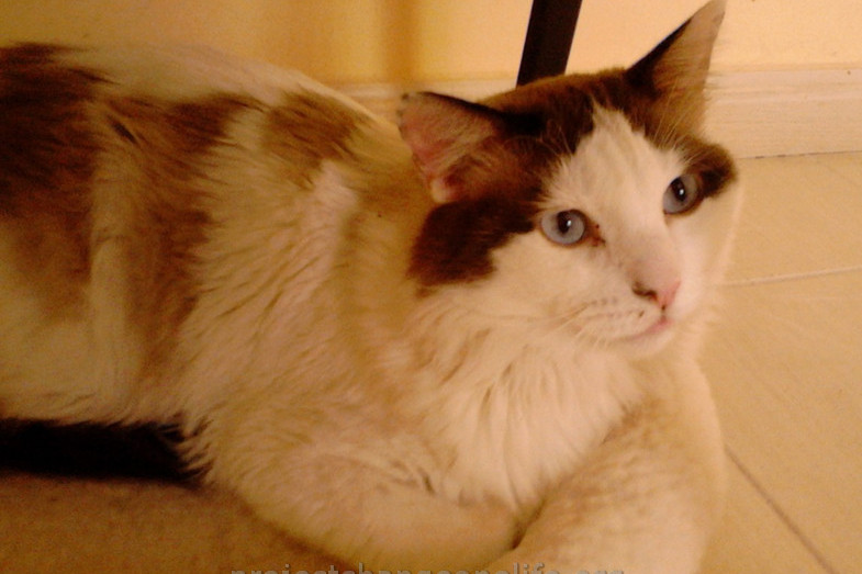Cat Finds Way Home After  Years
