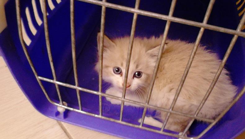 Welcome home teeny-tiny Mimi!