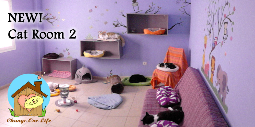 NEW! Cat Room 2