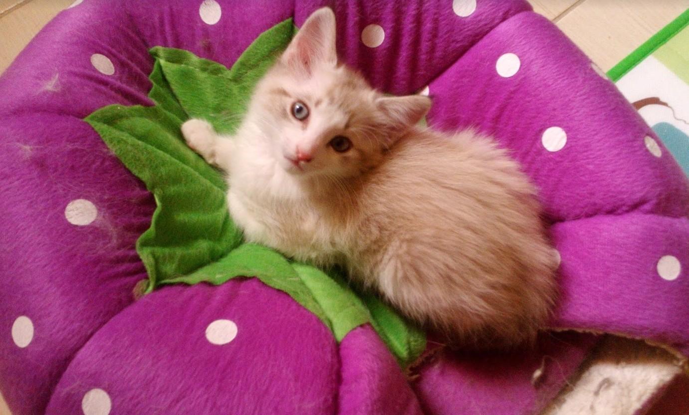 Mimi, 2 months old