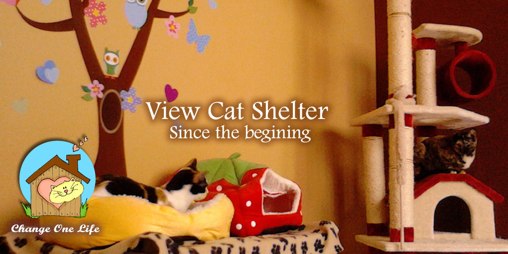 View Cat Shelter since the begining
