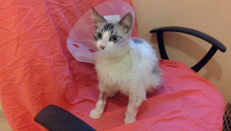 Image Result For Can You Spayed