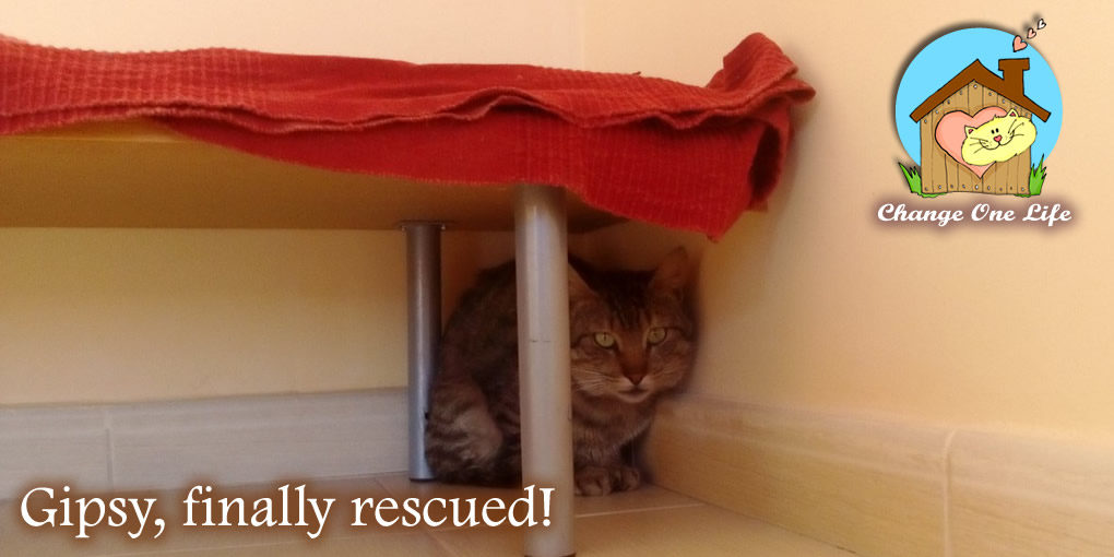 Gipsy, finally rescued!