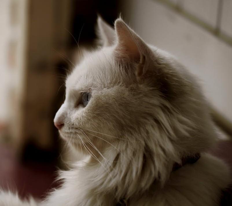 Geriatric Cat Rescues Oregon