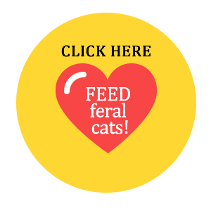Feed feral cats!