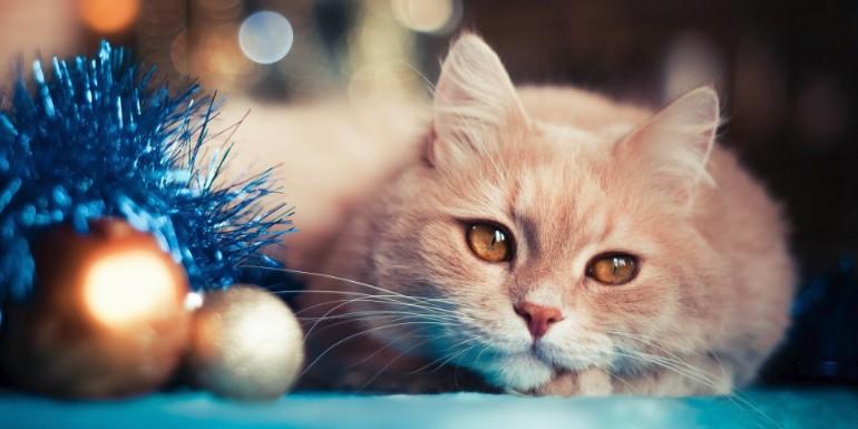 Tinsel, a hazardous holiday decoration