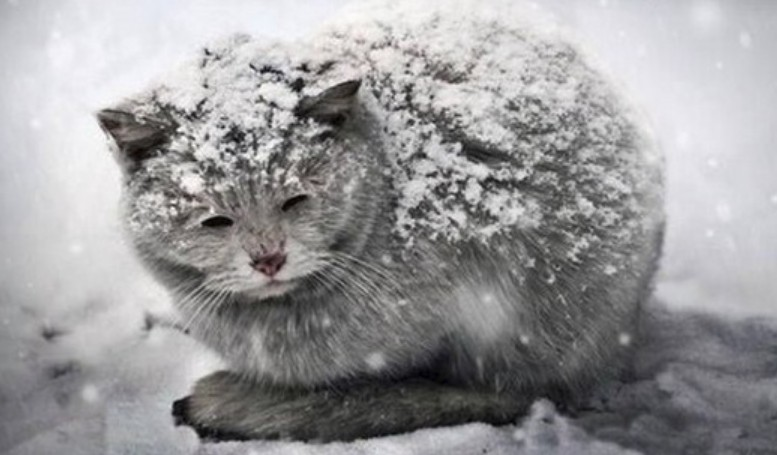 Homeless cats need extra TLC in winter
