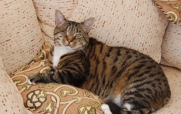 Nelson, a lucky one-eye cat