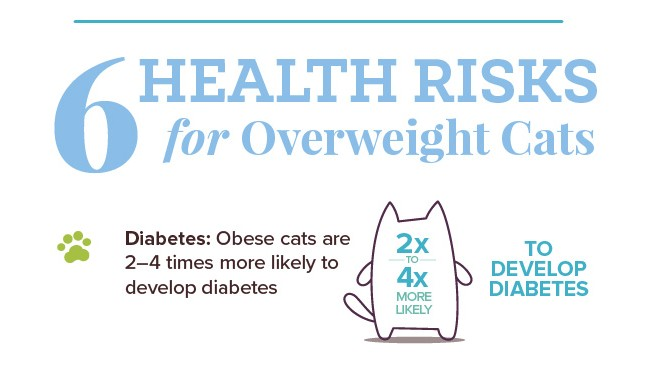 6 Health Risks for Overweight Cats