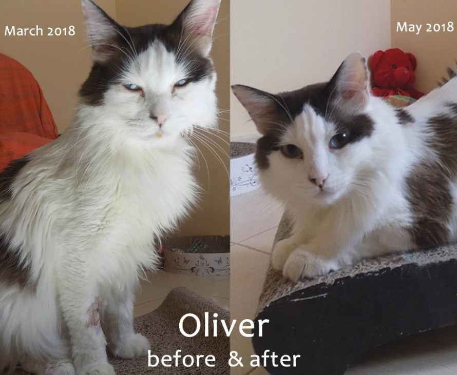 Oliver before and after