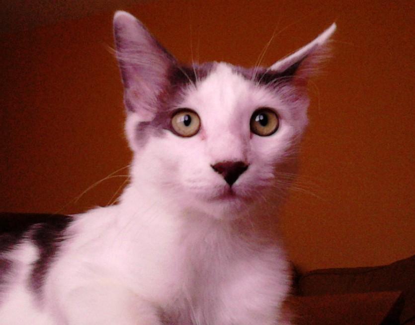 Angel Carw Cat Shelter Plainville Ma
