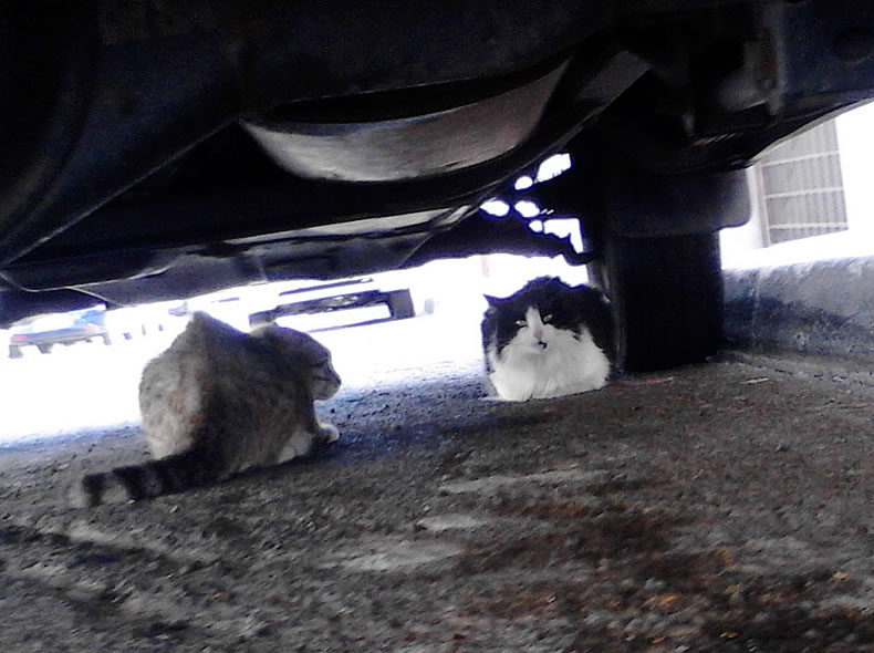 Bono & Hope under a car