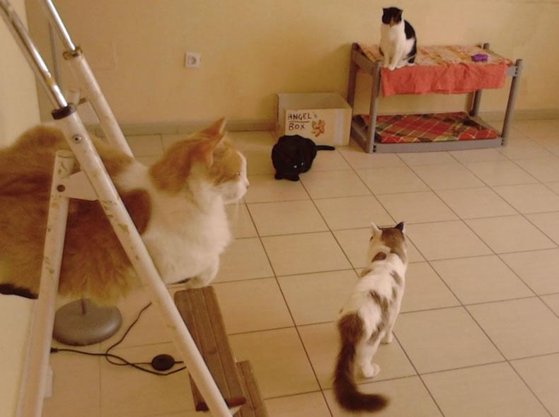 Cat Room 2