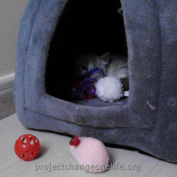 Tlc Cat Rescue Windsor Ontario