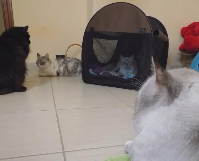 Suzie meets new friends