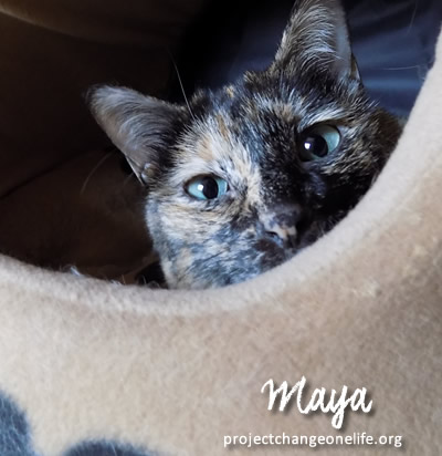 Sponsor Maya