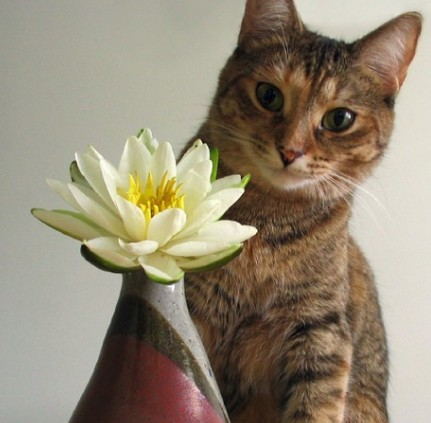 Easter lilies can be lethal to cats