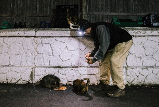 76-year-old man has been feeding stray cats in his area every day for the last 22 years