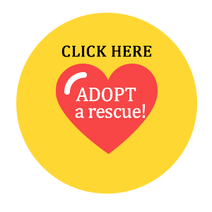 Adopt a rescue TODAY!