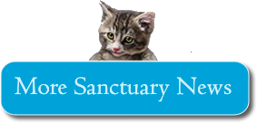 Sanctuary News