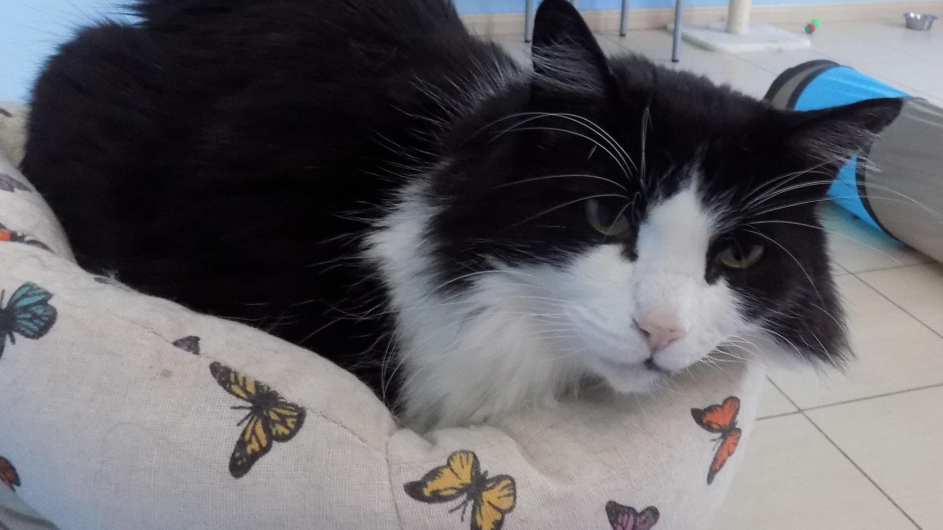 Change One Life Cat Sanctuary