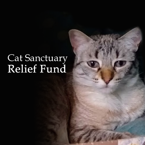 Cat Sanctuary COVID-19 Relief Fund
