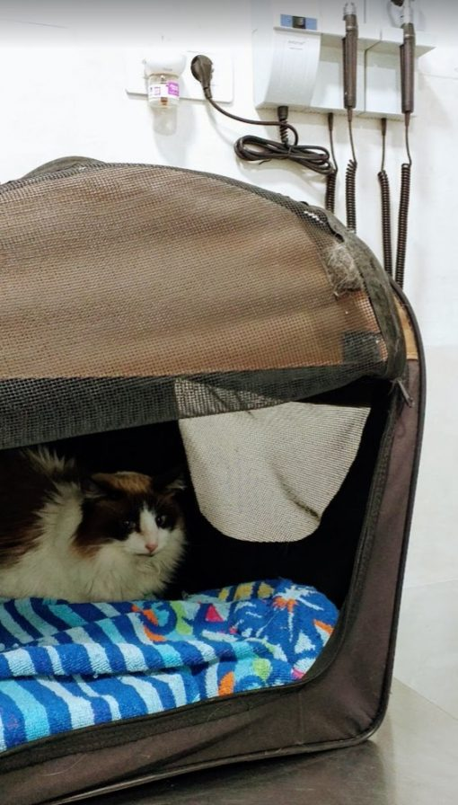 Bella at the vet's