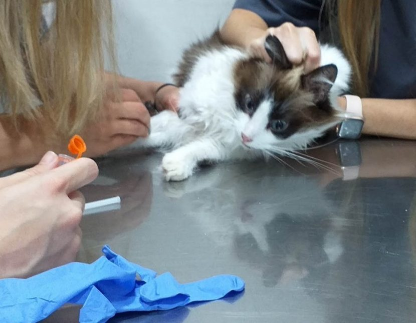 Bella goes to the vet